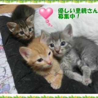 可愛い子猫ちゃん
