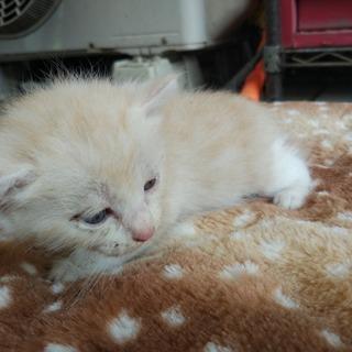 家に住み着いた野良猫が子供を産みました。