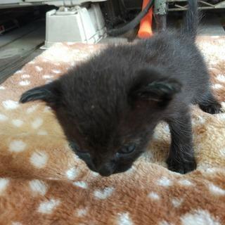 家に住み着いた野良猫が子供を産みました3。