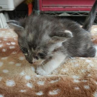家に住み着いた野良猫が子供を産みました4。
