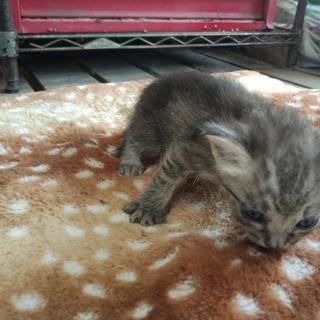 家に住み着いた野良猫が子供を産みました6。