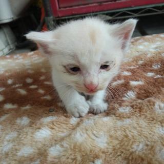 家に住み着いた野良猫が子供を産みました7。