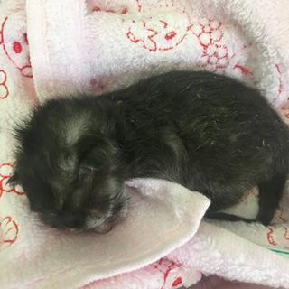 産まれたばかりの雌猫