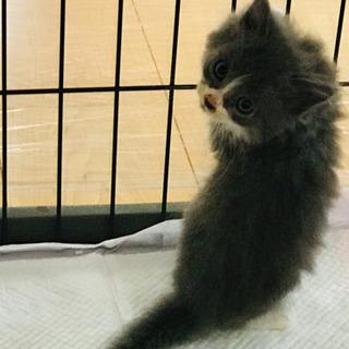 生後3ヶ月の子猫ちゃん  の画像