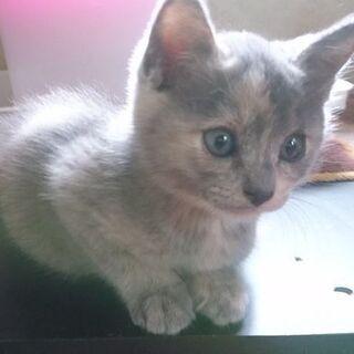 生後2ヶ月半の子猫です!