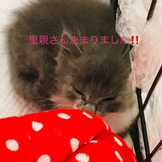 生後3ヶ月の子猫ちゃん   - 上尾市
