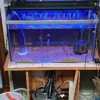 【超急募】熱帯魚を含む水槽フルセット譲ります(価格・水槽セット数変更)