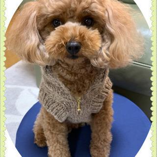編み物で愛犬服作れます🧶