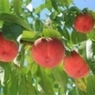 樹木・果樹用バイオ製剤 アクアリフト
