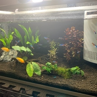 熱帯魚MIX