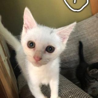 野良猫ちゃん(推定2ヶ月)