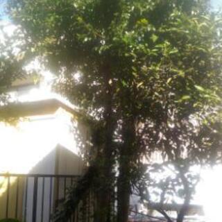 庭の木の伐採と処理