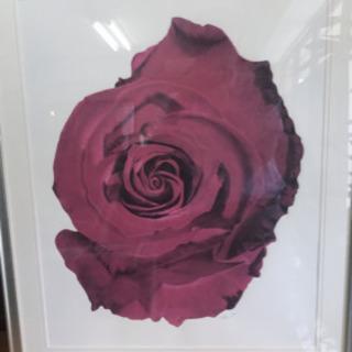 薔薇 ばら バラ リトグラフ 絵 額 壁掛け 飾り 中古