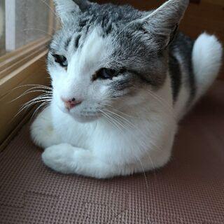 人懐こく、温厚なおじいさん猫です。