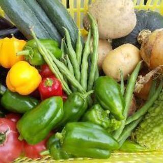 【県外版】朝採り新鮮無農薬お野菜セット