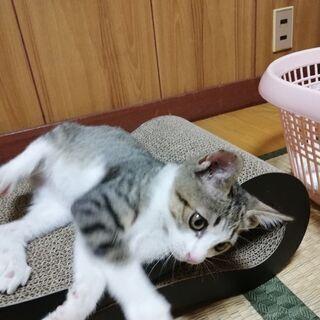 のら子猫 里親募集中