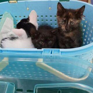 ぱっちりした目の子猫たちです。