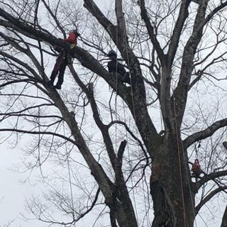 空師、高木剪定やロープクライミング、植木の仕事に興味ある方