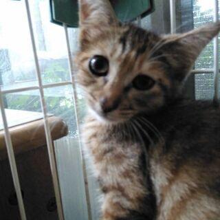 生後2ヶ月の雌子猫