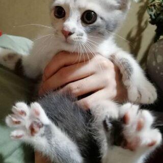 元気いっぱいのパステルの三毛子猫です!