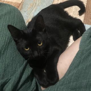 【里親さま決定】3ヶ月半の女の子♡黒猫こつぶちゃん - 新座市