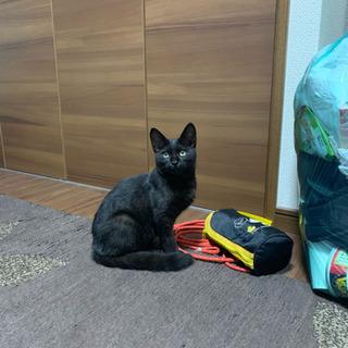 黒猫 推定3ヶ月 メス