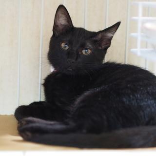 おっとり黒猫よもぎちゃん