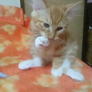 里親さん決まりました。ありがとうございました - 猫