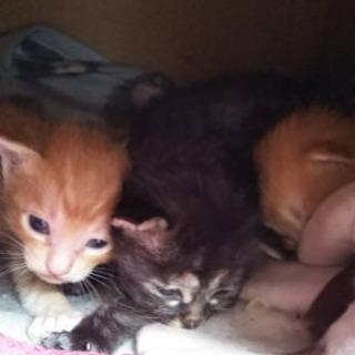 野良猫4匹産まれました。