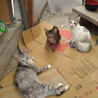 2匹の子猫ちゃん