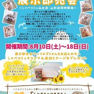 夏休み大展示即売会!!開催します!