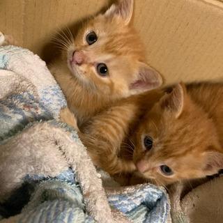 子猫 問い合わせ受付一度ストップとさせて頂きます。 − 埼玉県