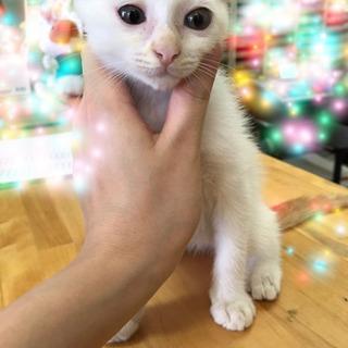 可愛い子猫里親さん募集^ ^