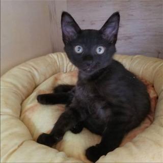 人馴れバツグン♡甘えん坊の美猫黒猫兄弟です!