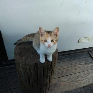 御池に子猫が生まれました。ミケトラ メス