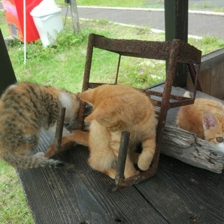 御池に子猫が生まれました。チャシロ1オス