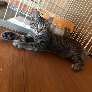 野良猫ちゃん(推定2ヶ月