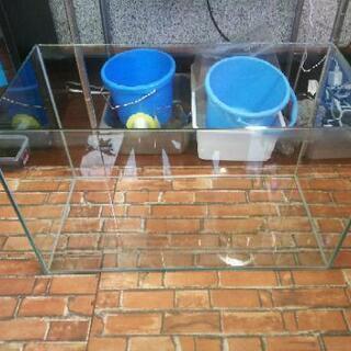 コトブキ レグラス 600 オールガラス水槽