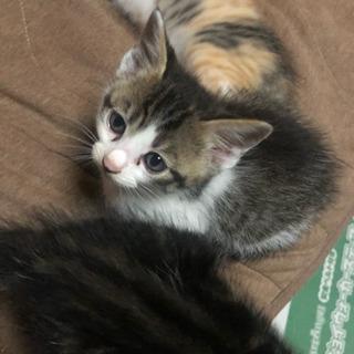 保護した子猫大事に育ててくれる方いませんか?