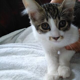 4ヶ月雄子猫