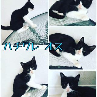 わしゃわしゃ〜^_^ 可愛い黒猫系in 空猫🐈✈️祭り❣️