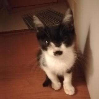 可愛い子猫を救って見ませんか?