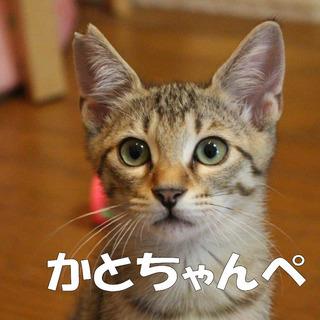 元気いっぱいちゅーる大好きなカトちゃんです