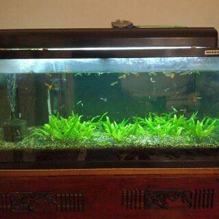 熱帯魚と水槽あげます
