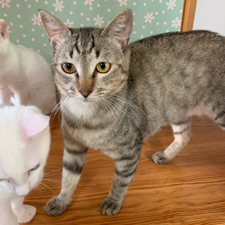 猫ちゃん大好きな里親様募集