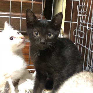 子猫6匹 男の子 黒猫 3カ月