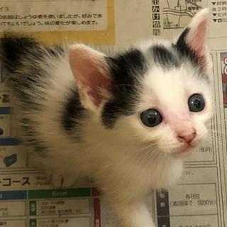 子猫生後1ヶ月くらい