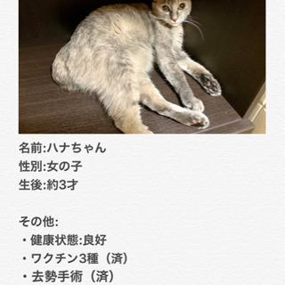 複数の猫用品も用意させて頂きます!複数写真有り(1匹から引き渡し...