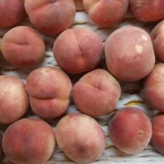 【あかつき終了しました】桃1kg150円より《特別栽培》福島市