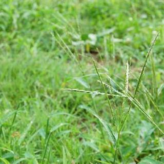 草むしり、草刈り 格安で致します!